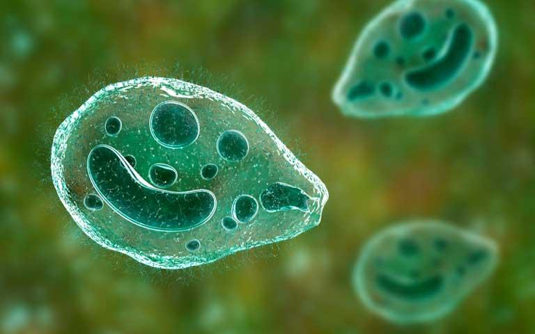 میکروارگانیسم های تک سلولی در تصفیه فاضلاب